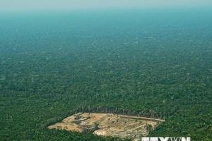 Báo động tình trạng mất đa dạng sinh học trên thế giới