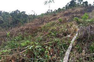 Nghệ An: Bắt 3 cán bộ BQL Rừng phòng hộ lập hồ sơ khống rút 5 tỷ