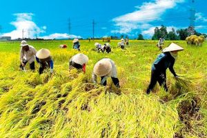 Việt Nam tổ chức cuộc thi báo chí về nông nghiệp cho các nhà báo ASEAN