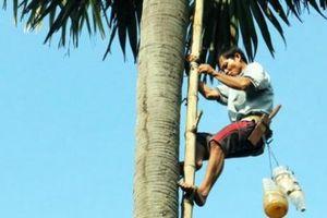 Kiếm tiền triệu từ nghề trèo cây kỳ lạ 20 năm mới ra trái ở An Giang