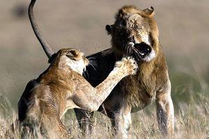 Cáu gắt vì 'chồng' đòi yêu, sư tử cái tát 'nựng' đau đớn
