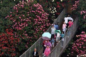 Đi tìm lối thoát trong mê cung hoa hồng khổng lồ