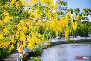 Tháng 5, hoa bò cạp vàng kể chuyện ngày ngày thắp lửa gọi mưa đầu mùa về Sài Gòn