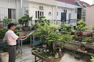 Cải thiện mảng xanh cho thành phố