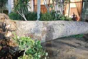 2 cây xanh ngã đổ trong đêm ở Sài Gòn khiến 1 người bị thương
