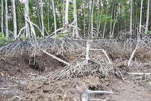 Viện kiểm sát phê chuẩn khởi tố 3 cán bộ Ban quản lý rừng phòng hộ