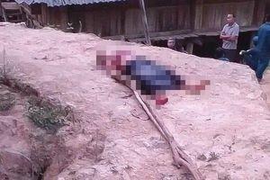 Điện Biên: Một phụ nữ tử vong bên đường nghi bị giết, cướp tài sản