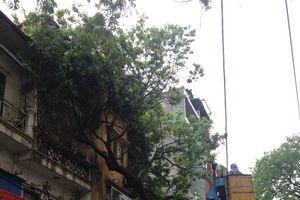 Hà Nội: Thay thế cây gãy, đỗ do mưa bão sau 5 ngày