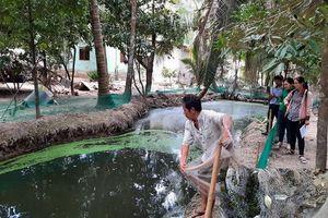 Bến Tre: Hiệu quả từ mô hình sinh học xử lý chất thải trong chăn nuôi