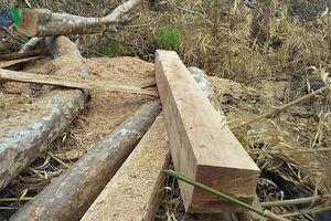 Kỷ luật Cảnh cáo Giám đốc Công ty lâm nghiệp để mất rừng