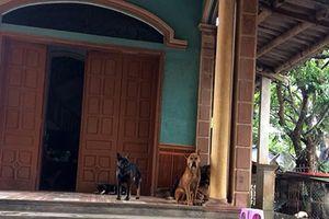 Khởi tố người chủ của đàn chó cắn cháu bé tử vong ở Hưng Yên