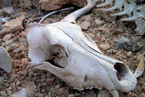 Bí ẩn Thung lũng chết thuộc top nguy hiểm nhất hành tinh