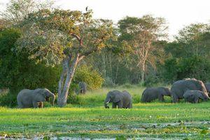 Phục hồi hệ sinh thái bị tàn phá ở Châu Phi đạt nhiều kết quả khả quan