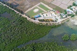 Người dân tự giác trồng lại rừng ngập mặn để giữ làng