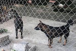 Hưng Yên: Khởi tố chủ nhà trọ có đàn chó cắn chết bé trai 7 tuổi