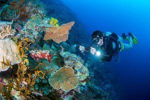 14 khu lặn biển ngoạn mục bậc nhất thế giới