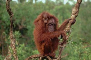 'Bóc mẽ' những chiêu lừa độc lạ nhất thế giới động vật