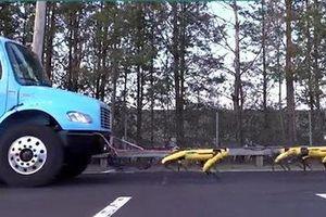 Chó robot có thể làm việc nhóm, hợp lực kéo xe tải lên dốc