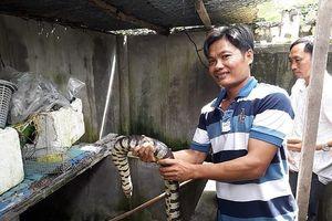 'Công tử' Bạc Liêu nuôi lúc nhúc loài rắn bự trong bể xi măng
