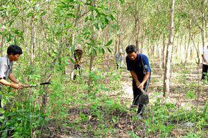 Có hay không việc chi trả thiếu tiền khoán bảo vệ rừng cho người dân