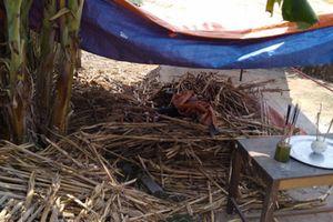 Người đàn ông chết bất thường dưới đống ngô ở Nghệ An