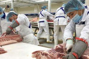 Kiến nghị mở cửa 'giải phóng' cho các trại lợn không nhiễm bệnh