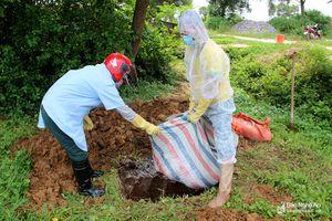 Ngày 13/5: Phát hiện thêm 3 ổ dịch tả lợn châu Phi tại các huyện Diễn Châu và Nghi Lộc