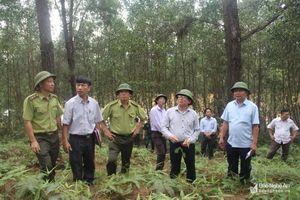 Xây dựng đường băng cản lửa dài 24km vùng giáp ranh Nghệ An - Hà Tĩnh