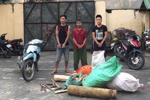 Rủ nhau trộm gỗ sưa, ba đối tượng bị bắt giam