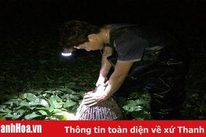 Chong đèn đi bắt cá đồng