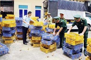Vận chuyển 22.000 con gia cầm giống nhập lậu