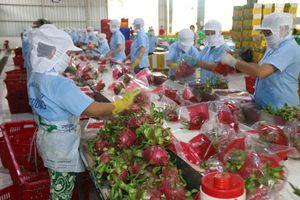 Hàng Việt nỗ lực chinh phục thị trường Mỹ