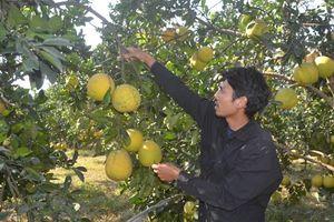 Nông dân sản xuất an toàn để bảo vệ chính mình và người tiêu dùng