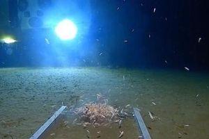 Ô nhiễm nhựa đã chạm tới nơi sâu nhất trong Đại dương