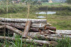 Dân tố cán bộ giữ rừng cho người dân vào chặt hạ cây rừng