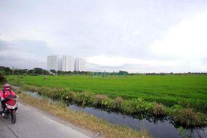 Đất nông nghiệp ở TP.HCM đang bị thoái hóa nặng