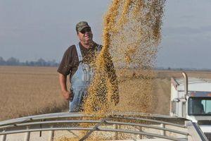 Mỹ dành 15 tỷ USD 'giải cứu' nông dân trong cuộc chiến thuế quan với Trung Quốc