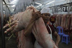 Miền Nam quyết liệt khoanh vùng dập dịch tả lợn châu Phi