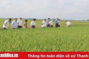 Hội thảo đầu bờ giống lúa lai Phú Ưu 978
