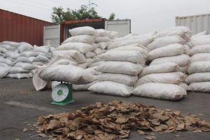 Hải Phòng: Thu giữ 8,3 tấn vảy tê tê lớn nhất từ trước tới nay