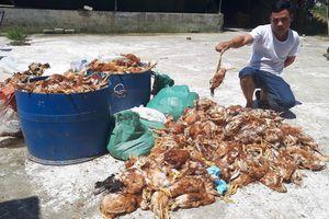 Hàng ngàn con gà của doanh nghiệp nuôi tại trang trại bị chết la liệt trong đêm