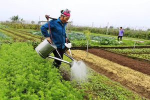 Lao động nông nghiệp giảm mạnh: Xu hướng chuyển dịch tích cực