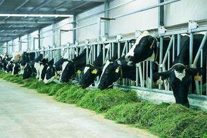 Vinamilk - doanh nghiệp tiên phong trong ngành công nghiệp sữa