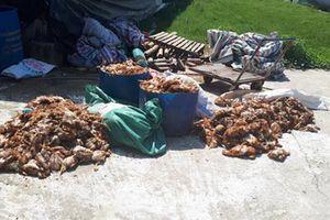 Hơn nghìn con gà bị chết sau khi trại nuôi bị cắt điện ném đá