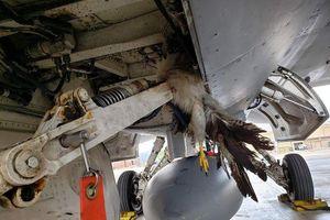 F-35B đâm phải chim khi cất cánh, Mỹ thiệt hại hàng triệu USD