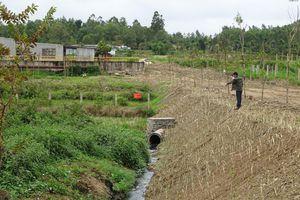 Gia Lai: Xả thải ra môi trường, nhà máy đường bị xử phạt gần 500 triệu đồng