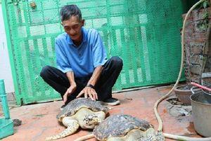 Bà Rịa- Vũng Tàu: Thả 2 cá thể rùa quý hiếm về biển