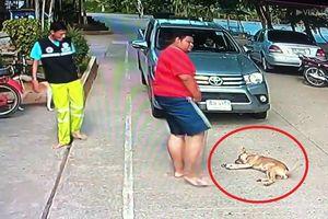 Clip: Chó nằm ườn ngủ trưa, 'cướp đường' của tài xế và cái kết bất ngờ