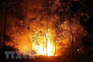 Cháy rừng trong đêm ở Điện Biên, hàng trăm người dập lửa