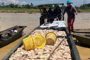 Hàng chục tấn cá chết trắng sông La Ngà